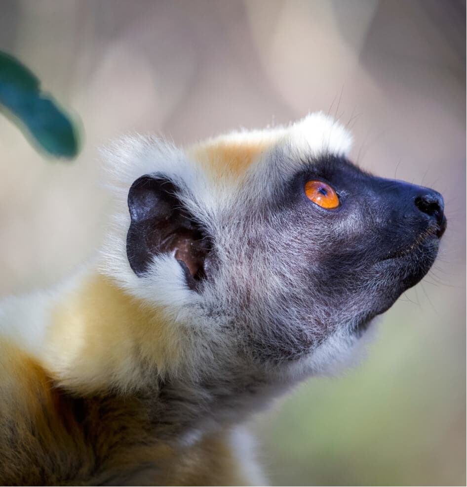 lemur-treks-2